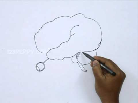 How to Draw a Human Brain