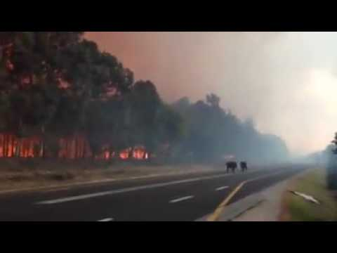 #Humans & animals run from fire in Knysna#