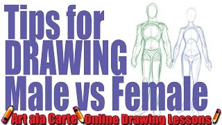 Tips for Drawing Males VS  Female Figures