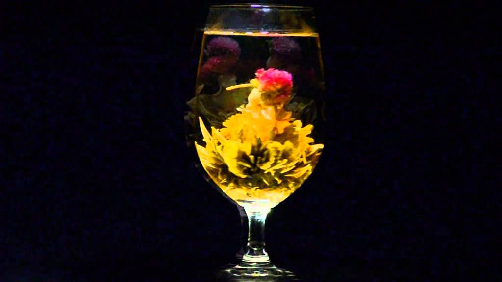 vidéo de l'éclosion d'une fleur de thé vert nommée « amour éternel