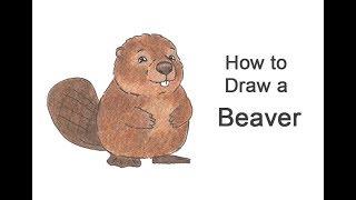 How to Draw a Beaver (Cartoon)