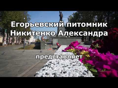 Егорьевский питомник Никитенко Александра. Как приехать из Егорьевска