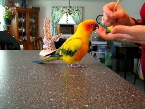Clicker bird