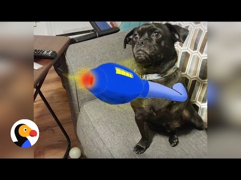 Dog Gets Cartoon Arm Drawn in For Missing Leg | The Dodo