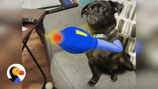 Dog Gets Cartoon Arm Drawn in For Missing Leg | The Dodo