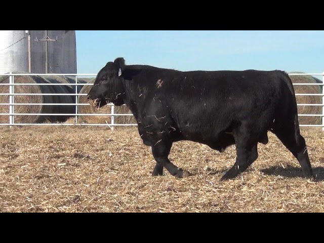 Express Ranches Lot 353