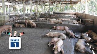 Hà Nội: Khan hiếm lợn, người dân nghỉ bán