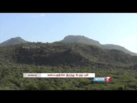 Tiger's skeleton found at Kalakkad Western ghats | Tamil Nadu | News7 Tamil