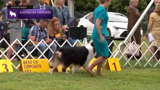 Australian Shepherds | Breed Judging 2021