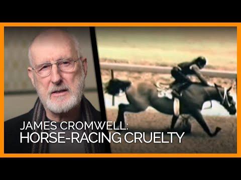 Download Youtube: Demolition Derby: PETA's Investigations Expose Horse-Racing Cruelty