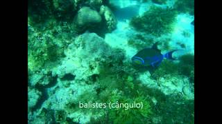 trilha interpretativa subaquática - parte 1: costão rochoso do prof. futema