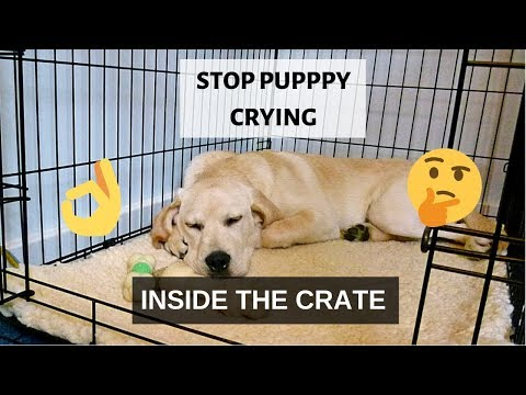 How To Stop Puppy Crying Inside The Crate At Night