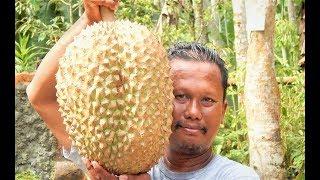 DURIAN BAWOR TERMAHAL!!  Rekor TERJUAL Rp 900.000 per Buah | Makan BESAR | DURIAN RAKSASA BERBUAH