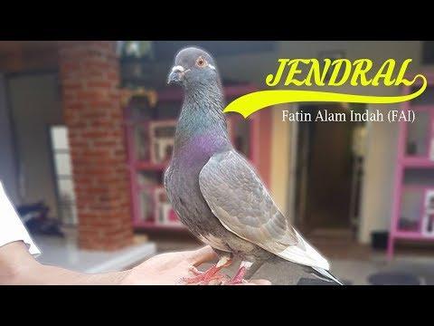 Download 95+  Gambar Burung Merpati Yang Indah HD Paling Unik