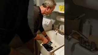 Oregon Coast Mussels: Prepping after Harvest