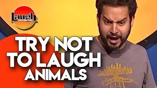 Download Try Not To Laugh | Animals | Laugh Factory Stand Up Comedy Mp3 and Videos