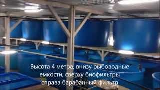 УЗВ сом 30т  в год(Выращивание рыбы в системе замкнутого водоснабжения., 2015-06-24T18:22:26.000Z)