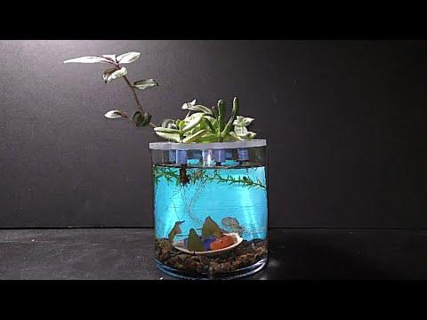 Vase Aquarium Garden