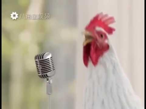 Петушиный голос