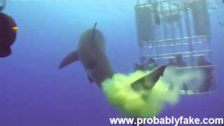 Great White Shark Poops