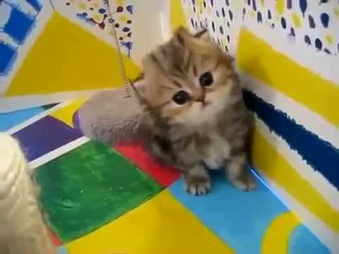 Sweet Baby Cat. So Cute.