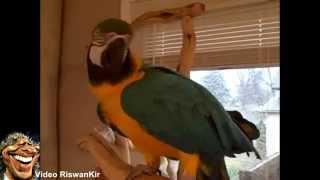 Заразительный хохот попугая Полли...)))