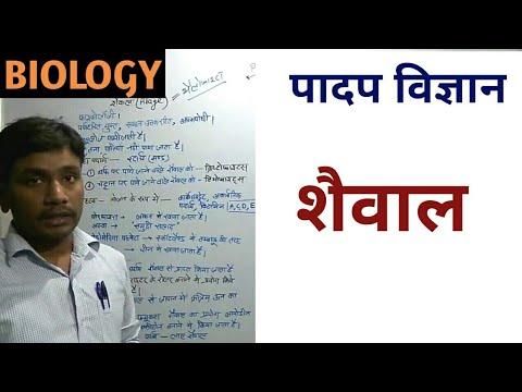 Biology: algae