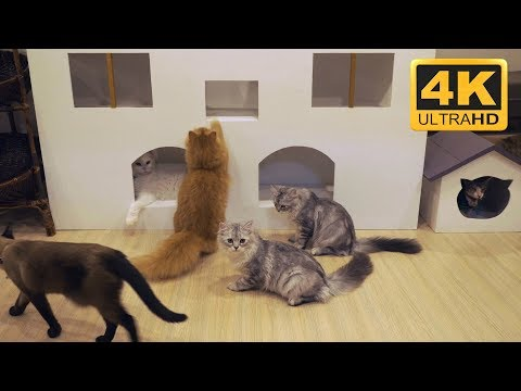 4K Cat Cafe  - Cat Screensavers