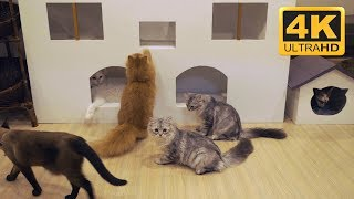 4K Cat Cafe Video - Cat Screensavers Download