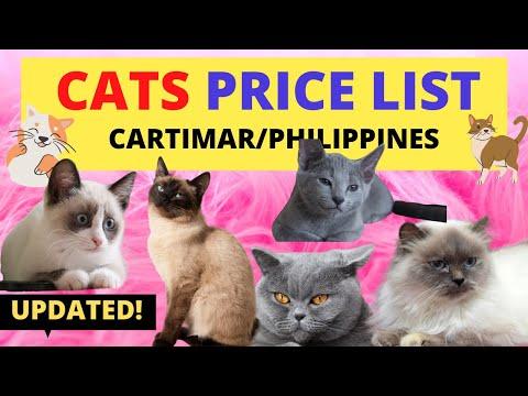 Pang Cat Puspin Cats Youtube