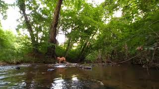 Taking the dog to the creek