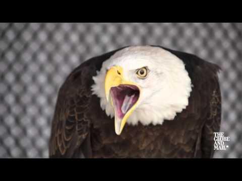 Birds of prey help keep you safe at Toronto