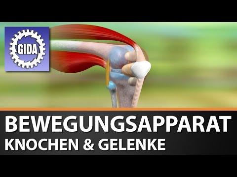 GIDA - Bewegungsapparat - Knochen & Gelenke - Biologie - Schulfilm - DVD (Trailer)