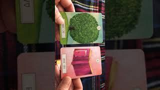 ルノルマン    不要なモノを断ち切って、小さな芽を育てるために thumbnail