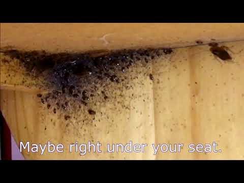 German Cockroaches  Roach Control Greenville, Spartanburg, Anderson, Columbia SC