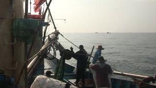Tin Tức 24h Mới Nhất : Nỗi lo tàu giã cào tận diệt nguồn hải sản ở Quảng Ngãi