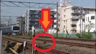 常磐線の線路を横切る小動物が間一髪でE531系との衝突を避ける?!