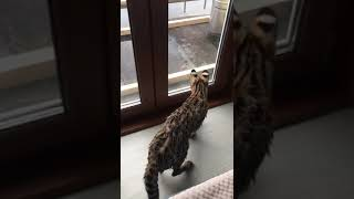 Увидела на балконе птичку. Охота началась