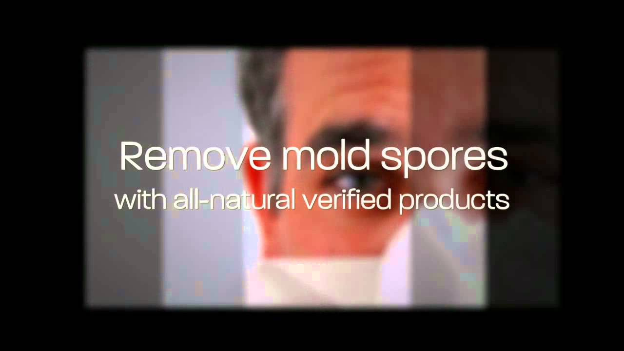 home mold remediation low cost diy home repair fungus removal tips