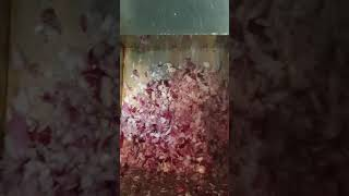 경동 건강원 솔잎 자색양파즙 2솥 올립니다