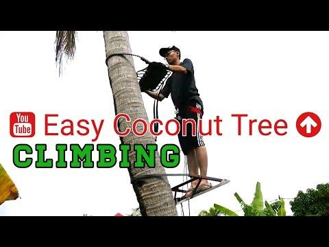 tree-climbing-techniques-tutorial-|-how-to-climb-tree
