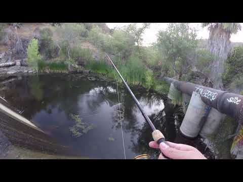 Fishing San Diego For Large Mouth Bass
