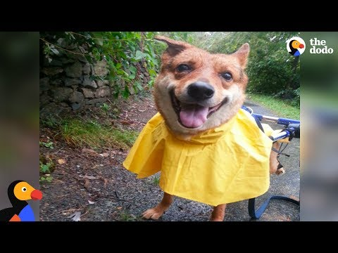 Injured Street Dog is the Happiest Boy After Being Rescued by Woman | The Dodo