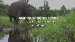 #WetlandBiodiversityMatters