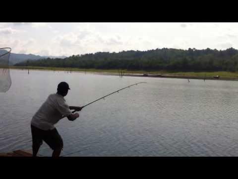 แพน้าส่ง ตกปลาเขื่อนวชิราลงกรณ