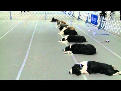 Obedience Masters Open Class - Jump Height 20 inches - AKC/Eukanuba National Championship 2014