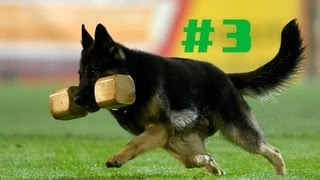 Ipobservations Episode 3 Handler Help In Dog Sport