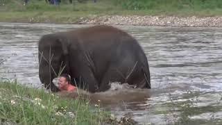 10 lần động vật cứu người