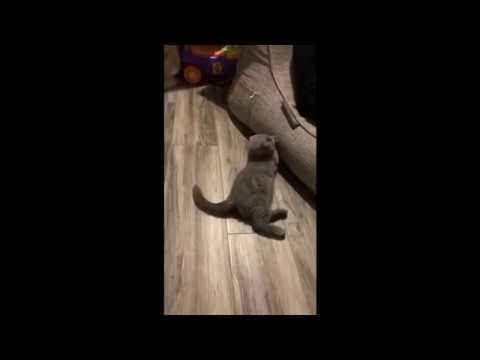Прилучный с котом