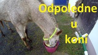 Odpoledne u koní // Hledám někoho do party !? :-O //
